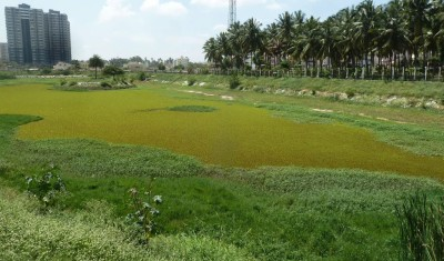 GreenScraps @ Puttenahalli lake