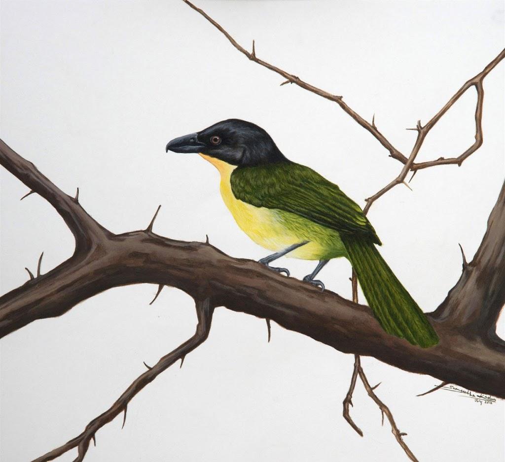 Endemic & endangered – Uluguru Bush Shrike