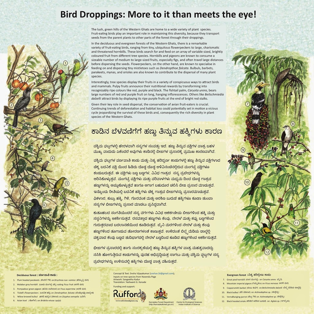 Frugivorous birds of the WesternGhats !